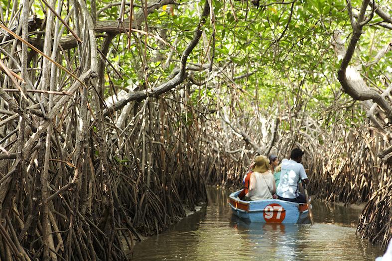 Ihmisiä veneessä mangrovemetsässä.
