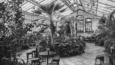 Winter Garden, there is trees nad many plants, in the front there is three tables and chairs.