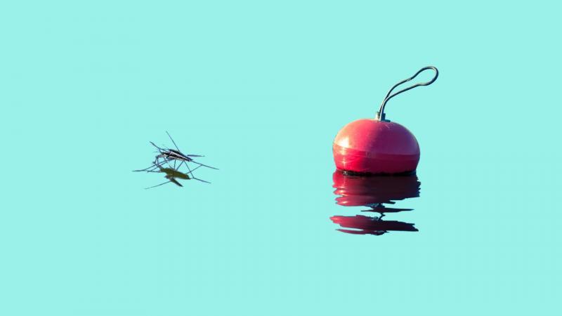Hyttynen ja poiju turkoosilla taustalla.