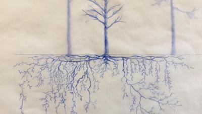 Kuulakärkikynäpiirros puusta ja puun juurista