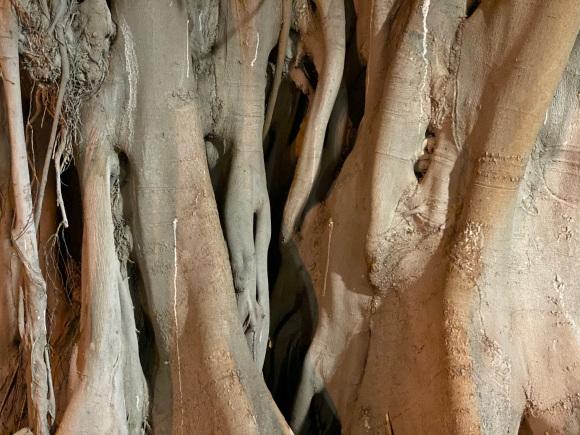 Lähikuva puusta.